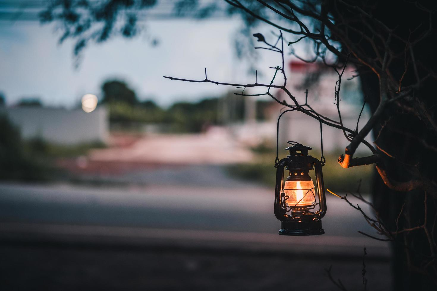 Vintage lantern on a tree photo
