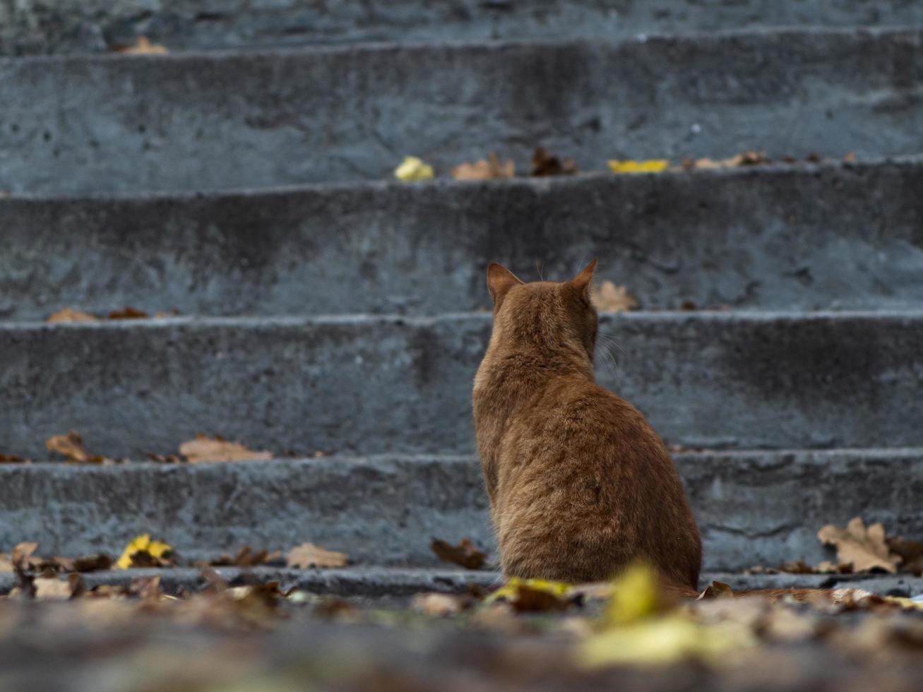 gato callejero en follaje otoñal foto