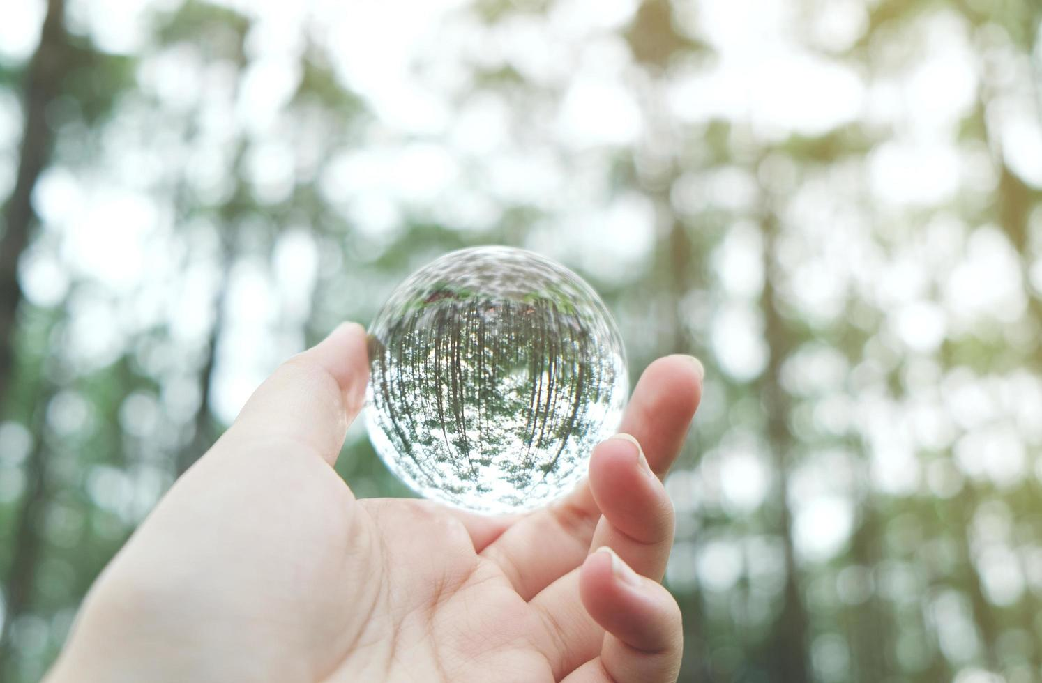 Crystal glass ball in nature photo