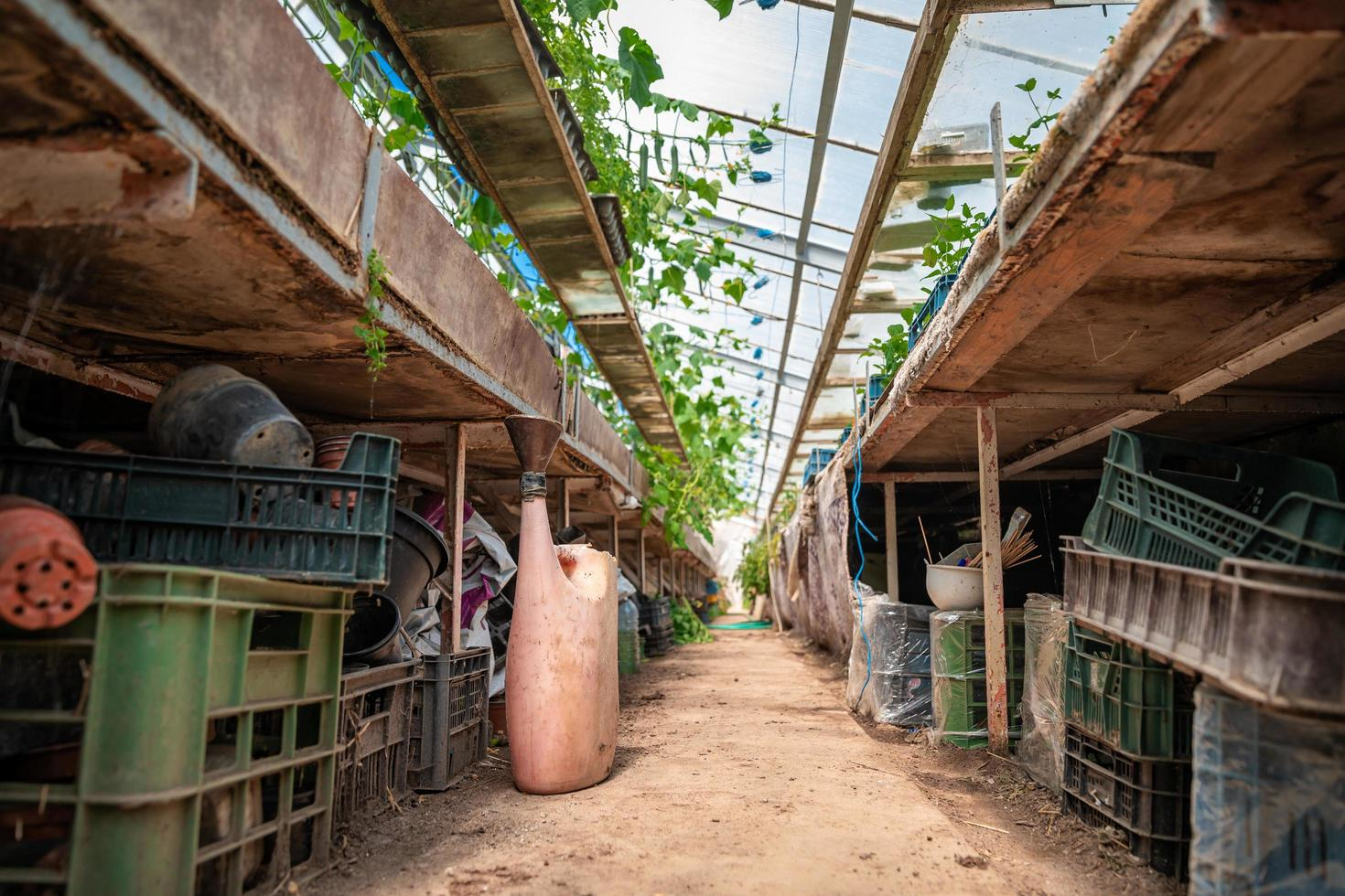 Interior view of greenhouse with tools photo