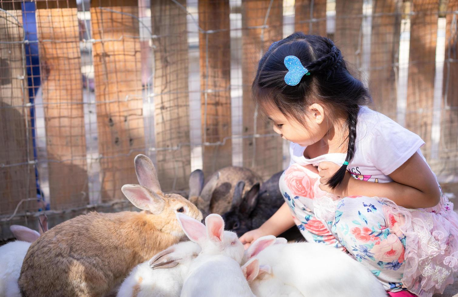Young Asian girl socializing with farm rabbits photo