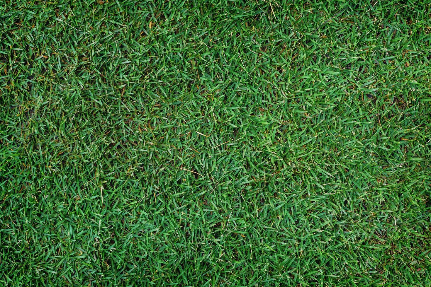 Green grass patch photo