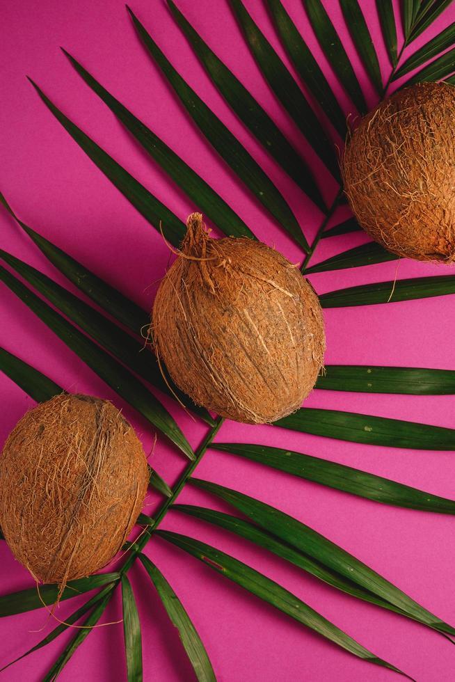 Tres cocos con hojas de palma sobre fondo liso rosa púrpura vibrante foto