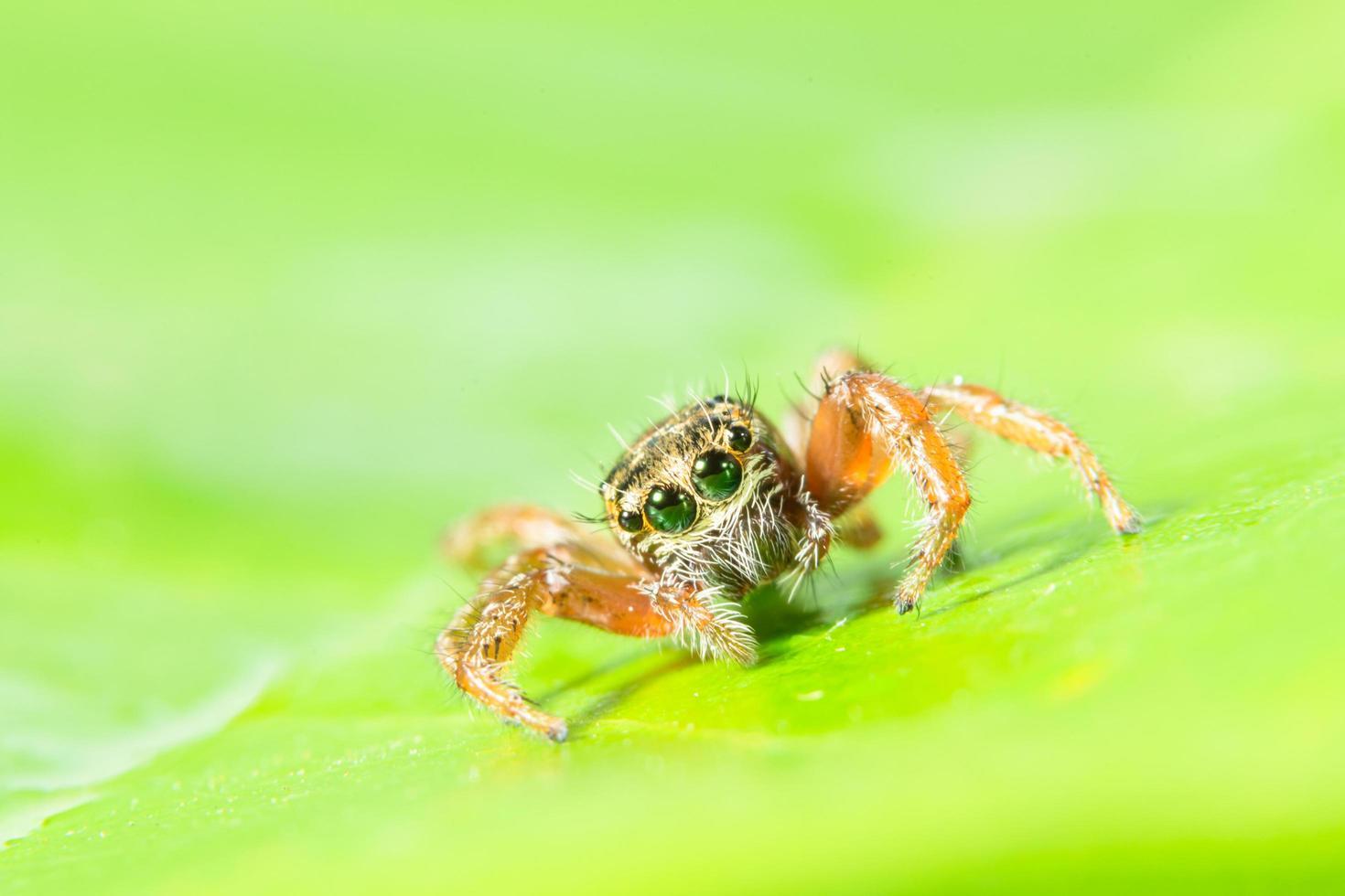 araña marrón sobre hojas verdes foto