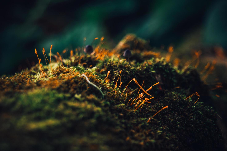 macro musgo en bosque foto