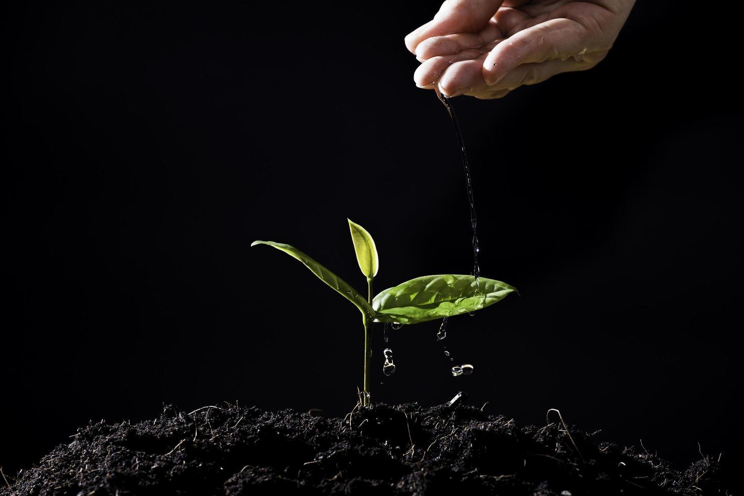Farmers hand waters seedlings on black background photo
