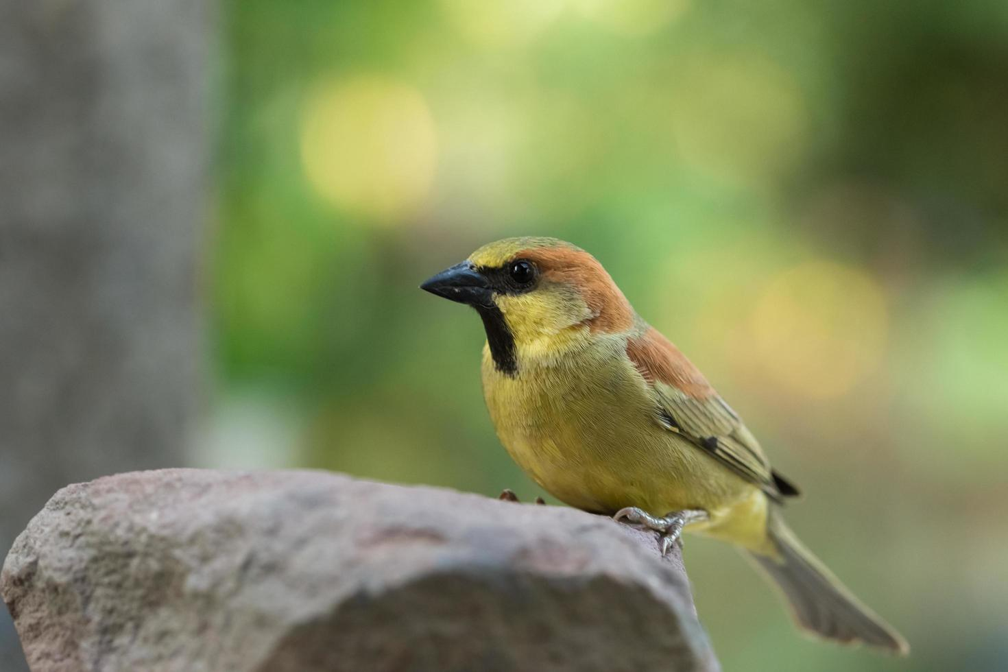 Colorful bird perched on rock photo