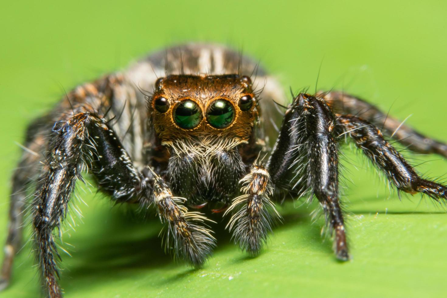 macro araña cruzando la hoja verde foto