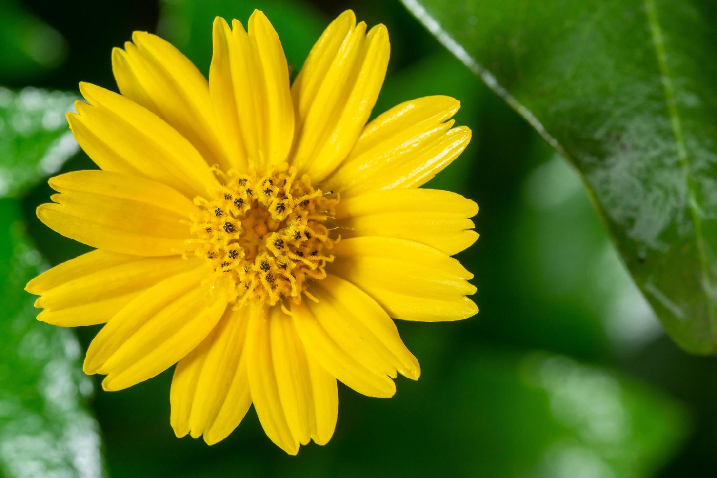 Yellow flower isolated from foliage photo