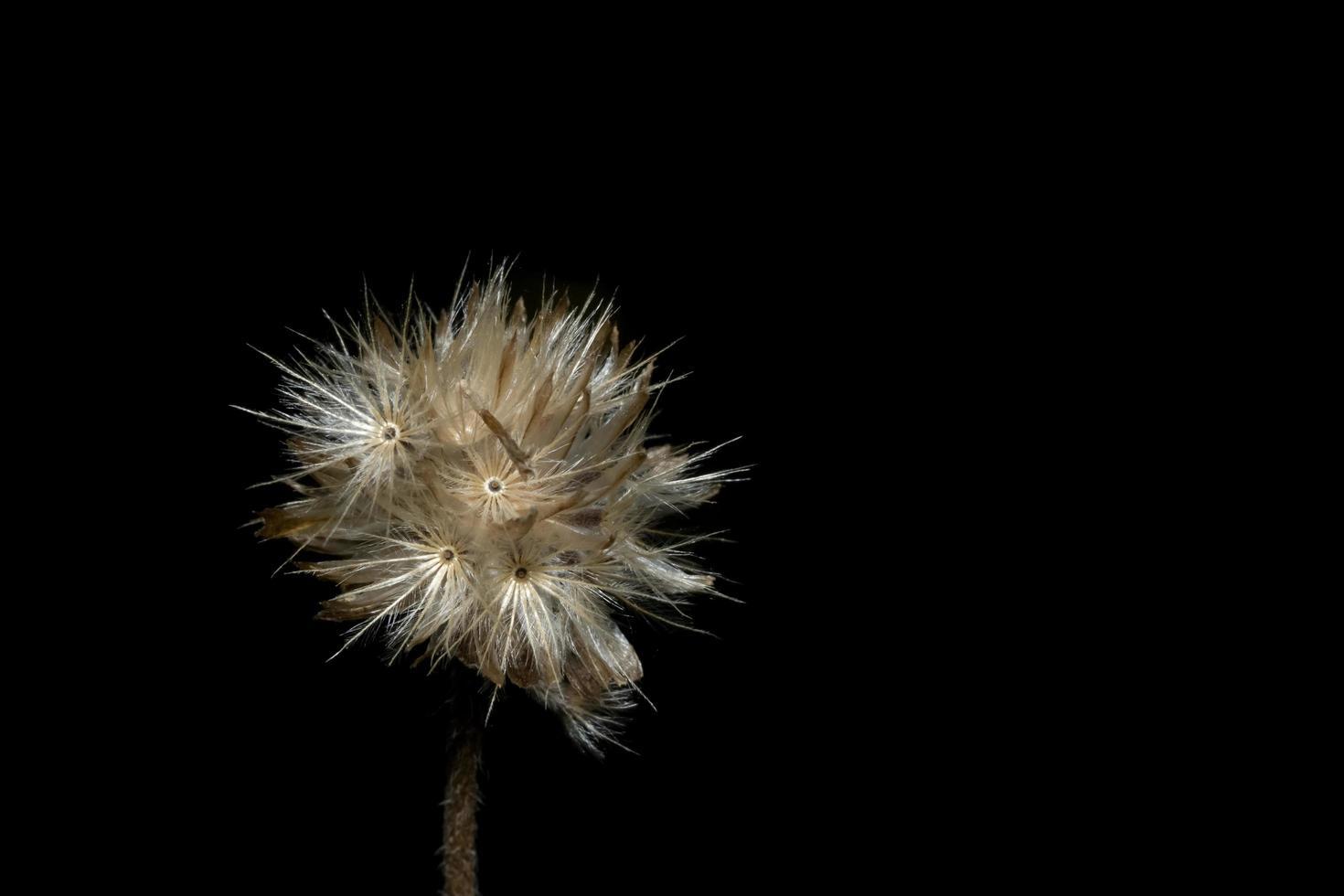 Background macro wildflower photo