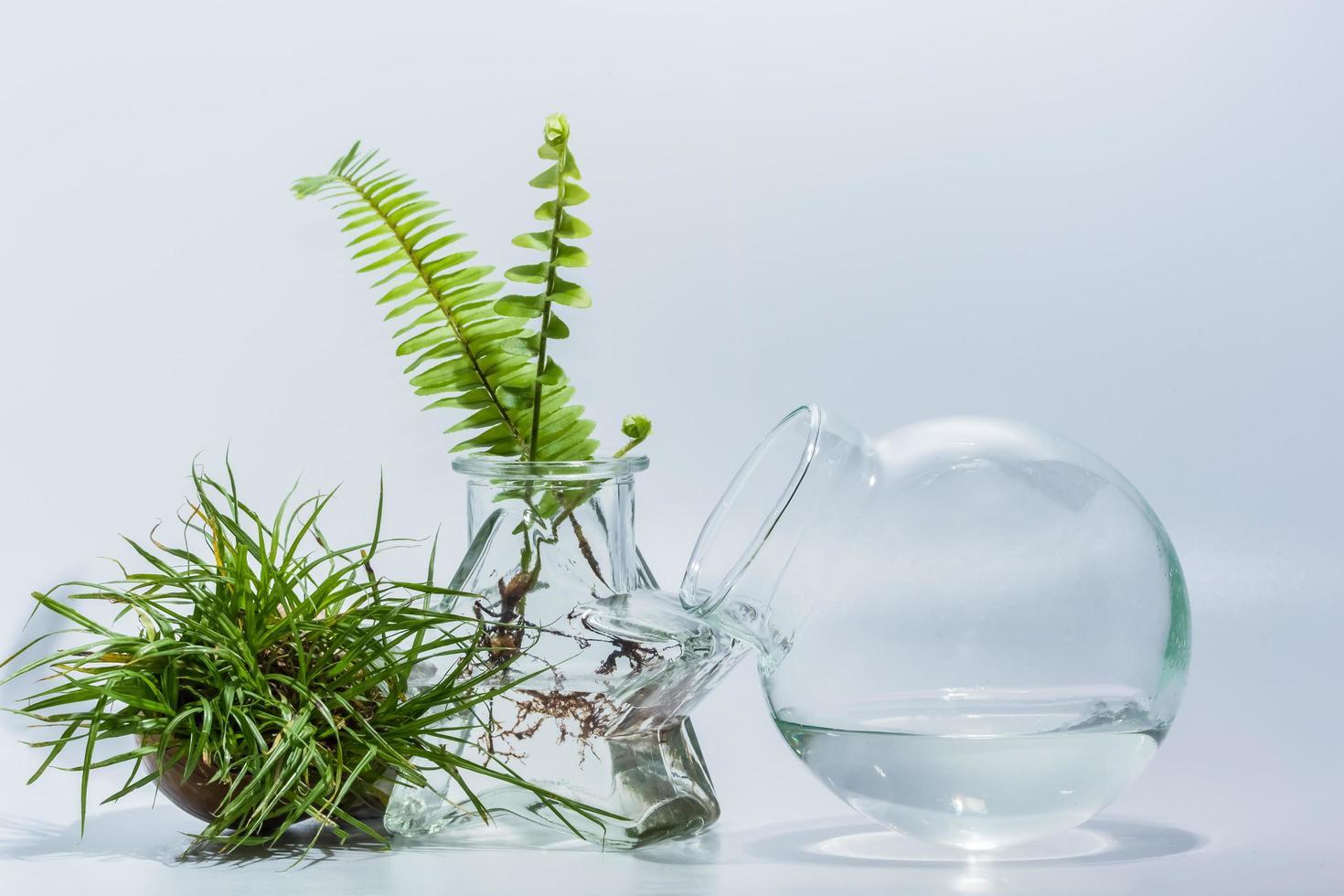 Terrarium plants on white background photo
