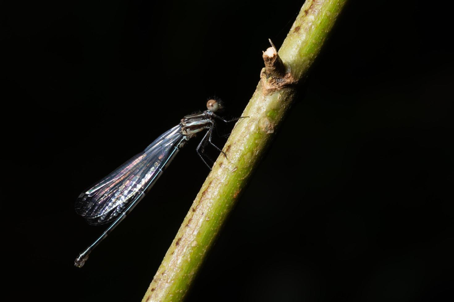 Dragonfly climbs plant stem photo
