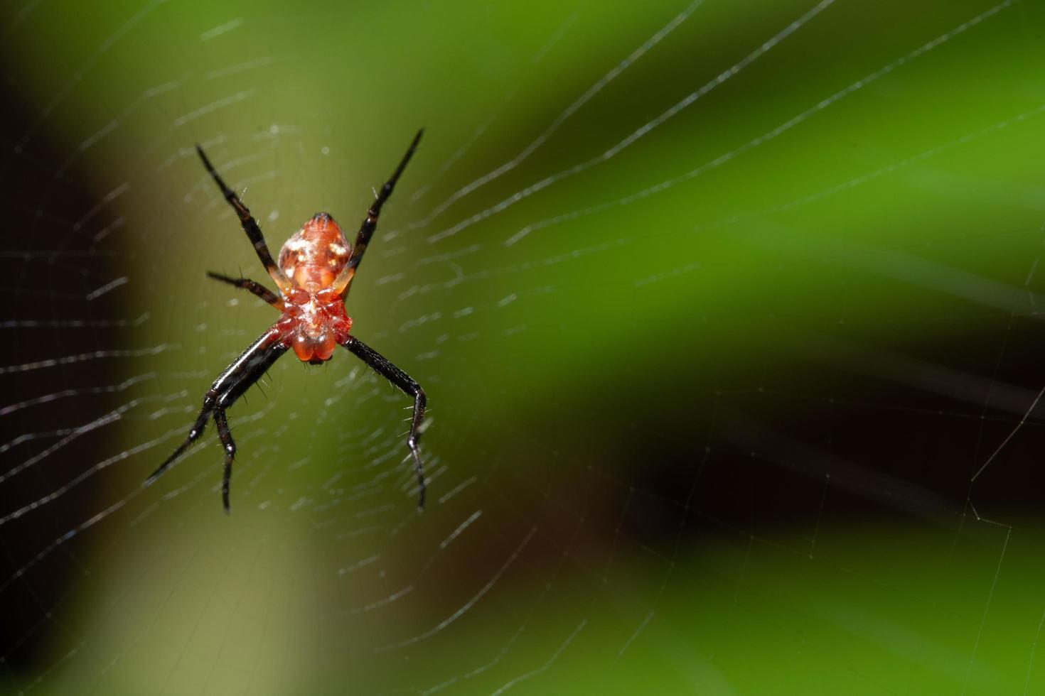 araña macro en la naturaleza foto