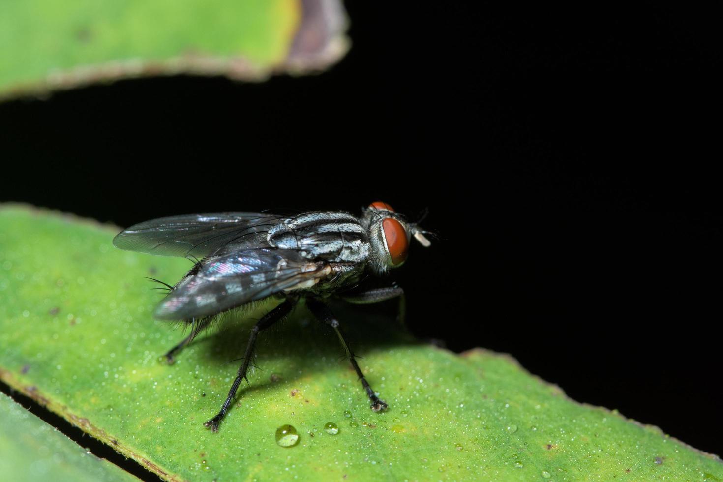 Macro fly on leaf photo