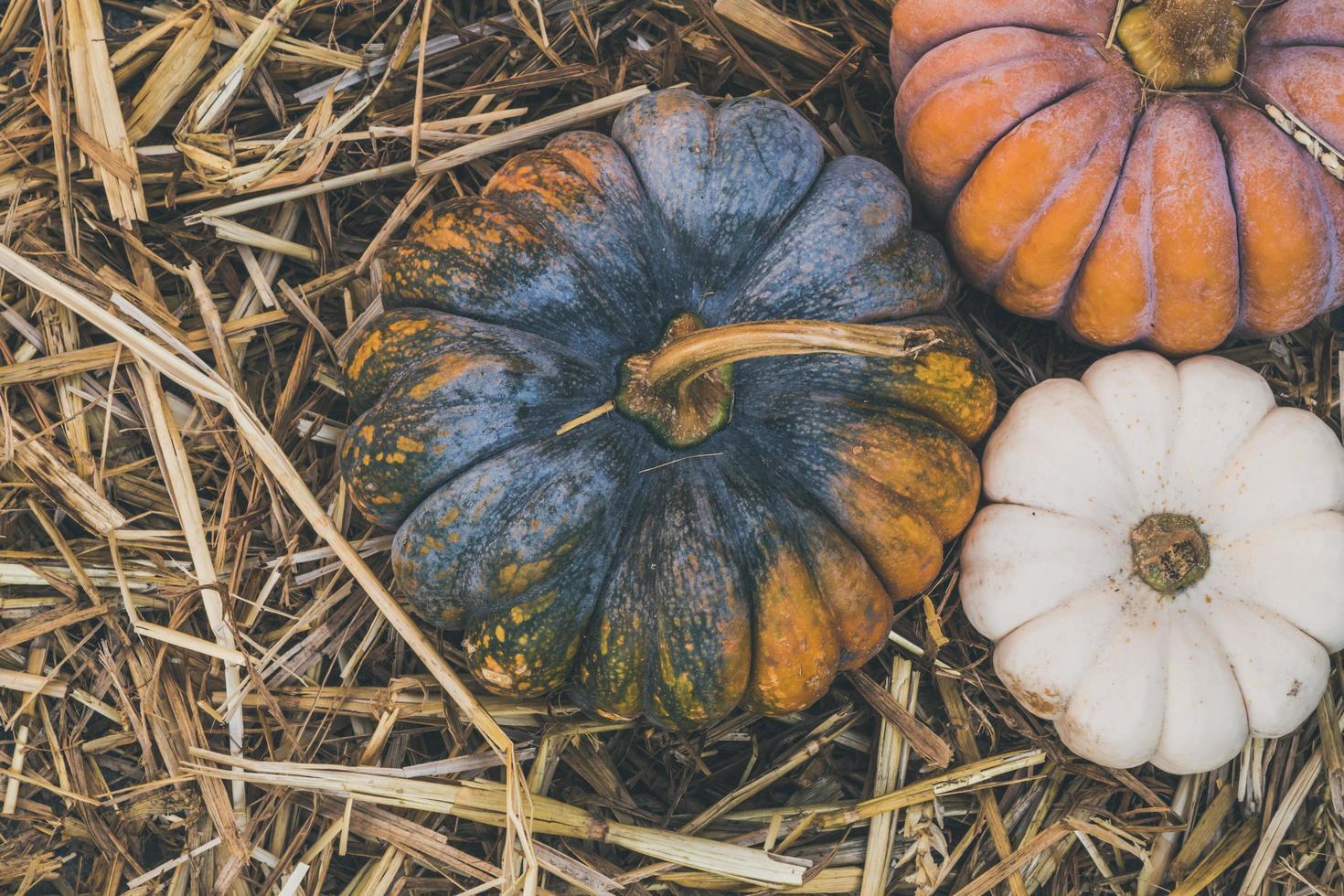 Pumpkins on hay photo