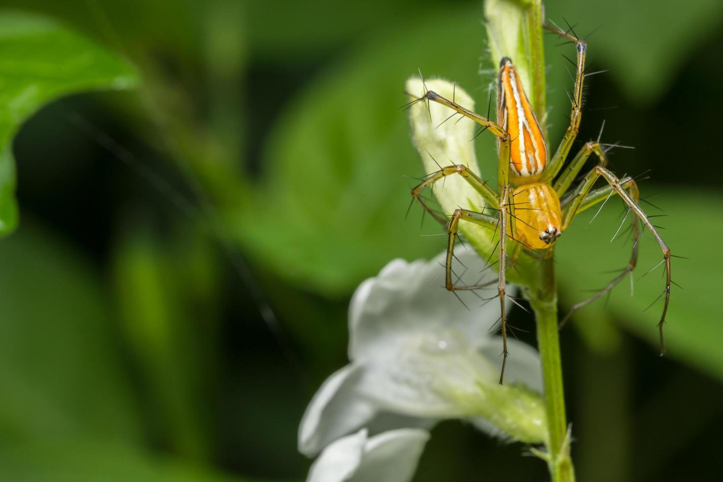 araña amarilla macro foto