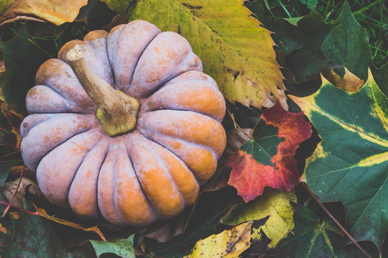 Pumpkin and autumn leaves photo