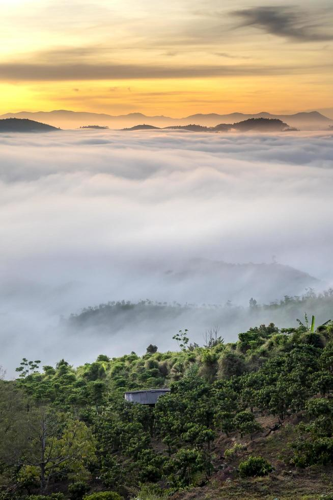 Trees among foggy hills and sunset photo
