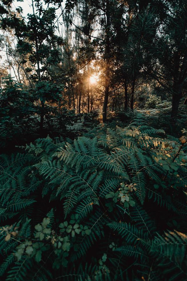 Ferns in forest photo