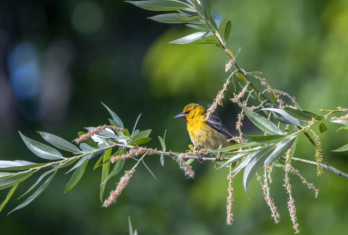 Bird perched on branch photo