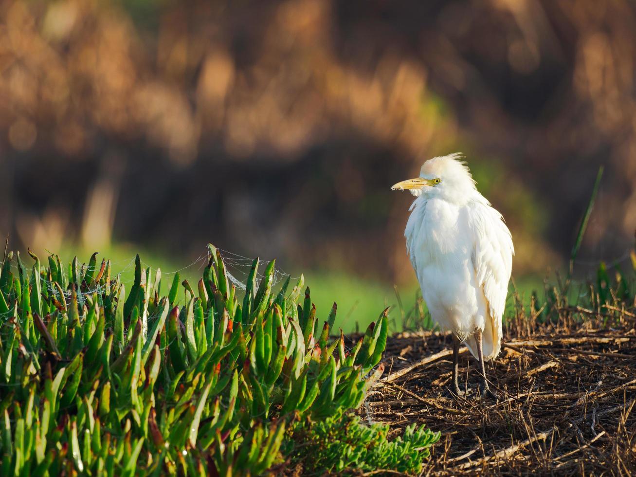 White bird in grass photo