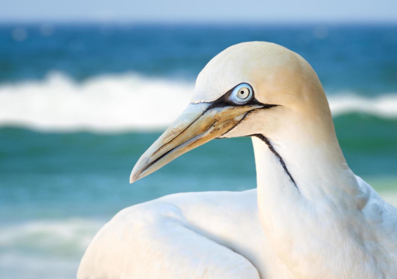 Close-up of albatross bird photo
