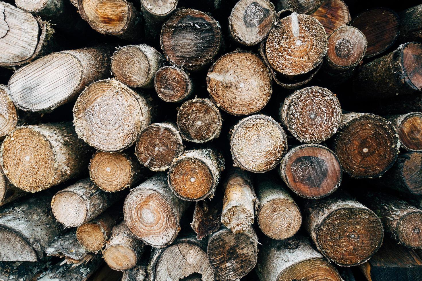 Pile of wood logs photo