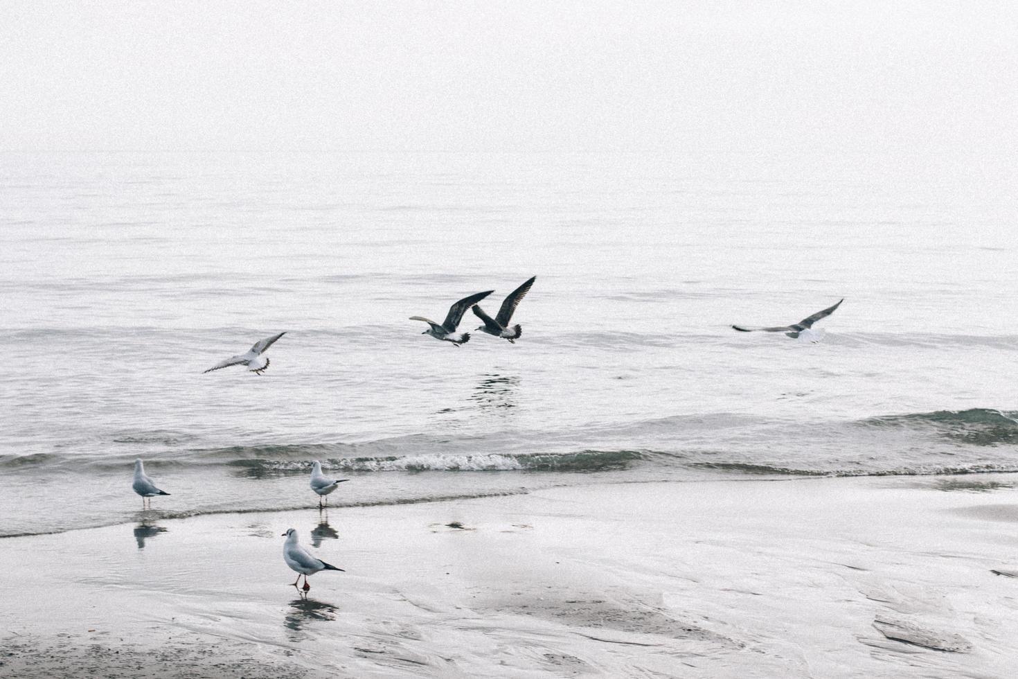 Seagulls fly above coastline photo
