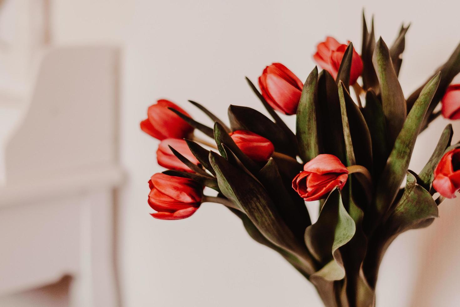 Red tulips in vase photo