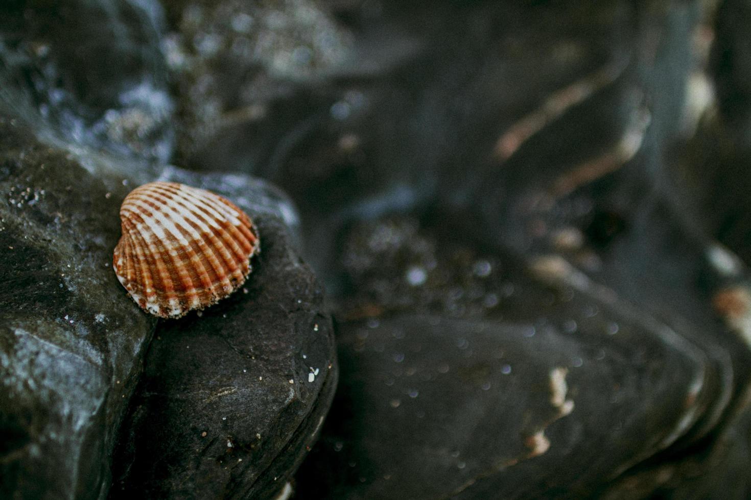 Seashell on black sandy rocks photo