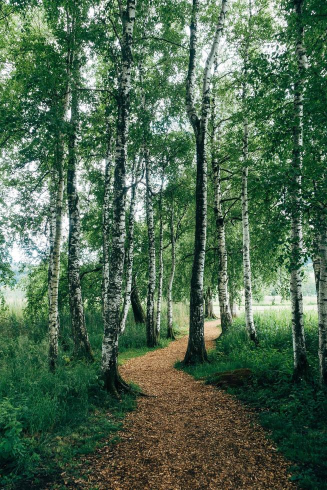 Dirt path winding through forest photo