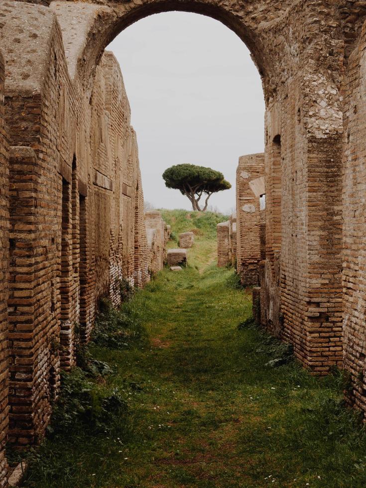 View of tree through ruins photo