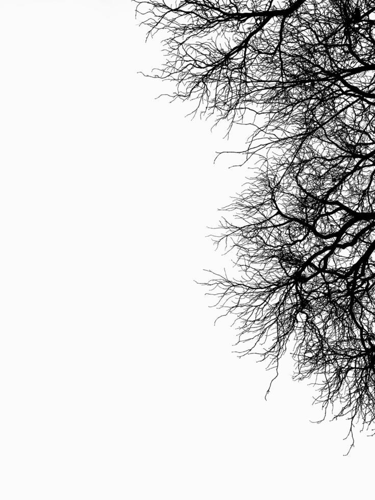 Bare tree on white sky photo