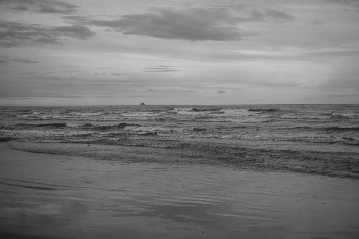 Grayscale ocean shoreline photo