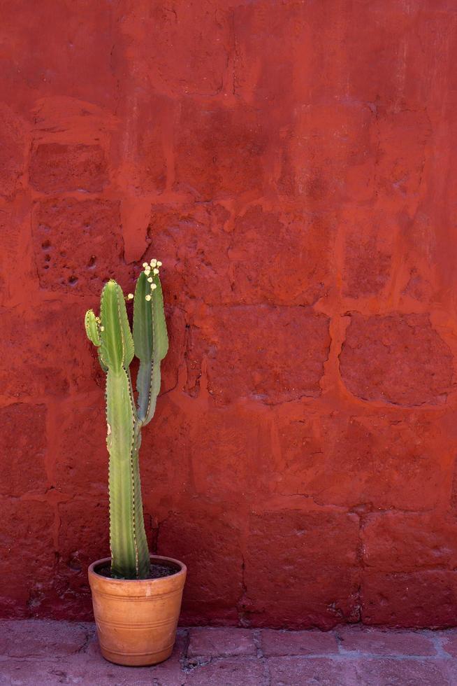 Green cactus plant outside  photo
