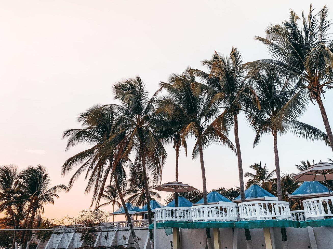 palmeras en un resort foto