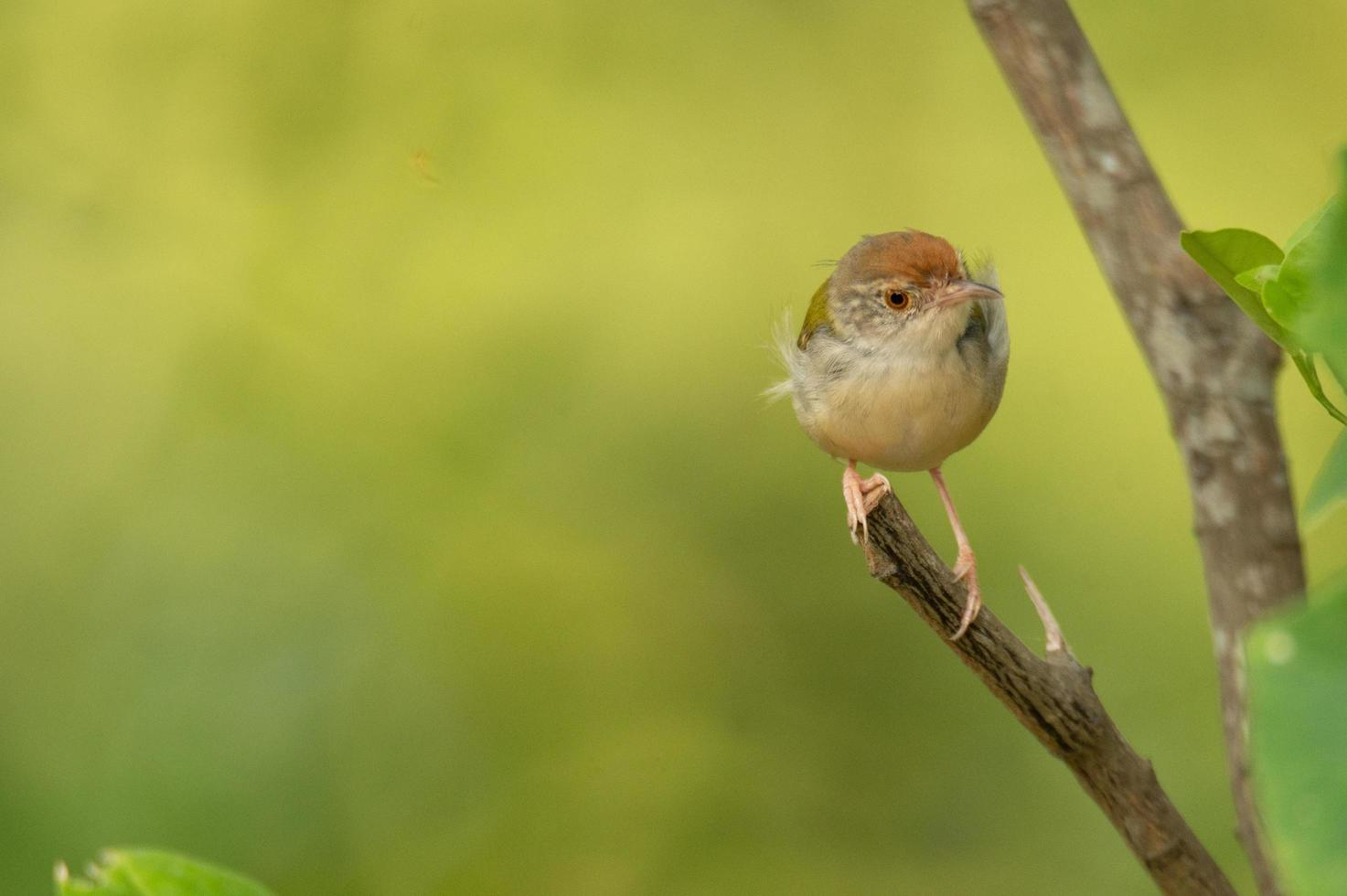 Small bird perched on branch photo