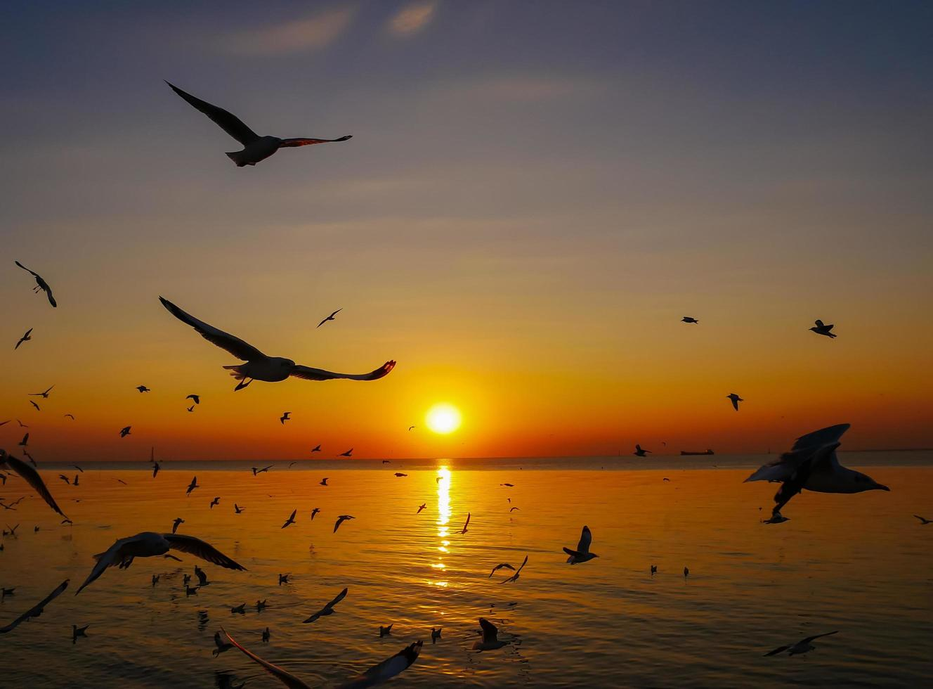 Silhouetted seagulls flying into sunset photo
