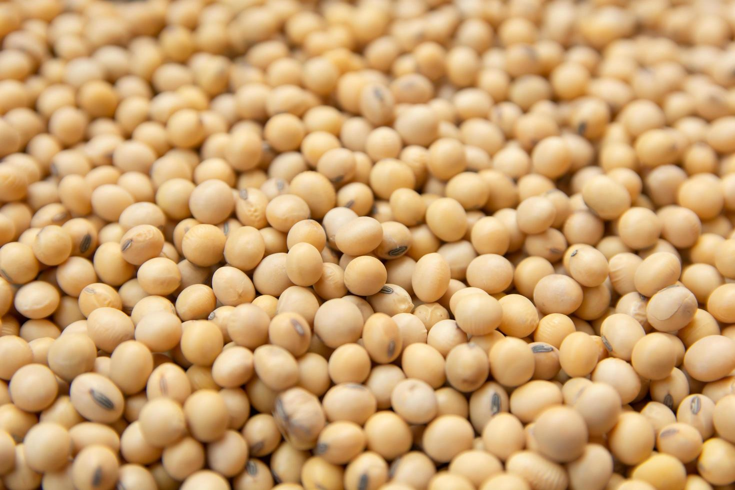 Close-up of soybeans photo
