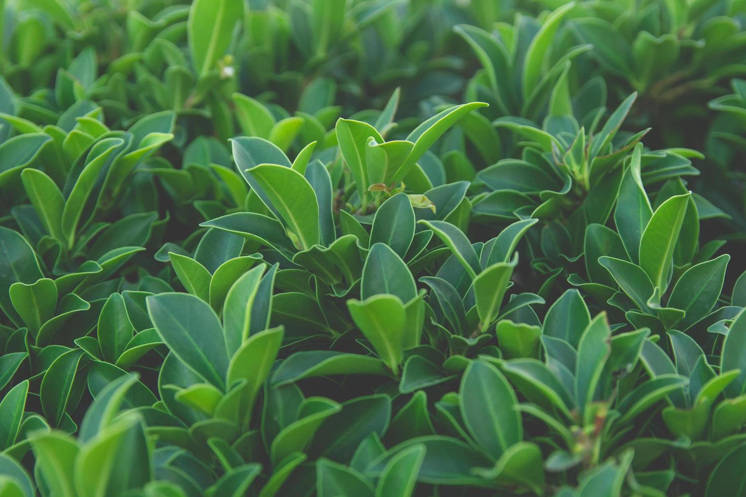 Close-up of green leaves  photo