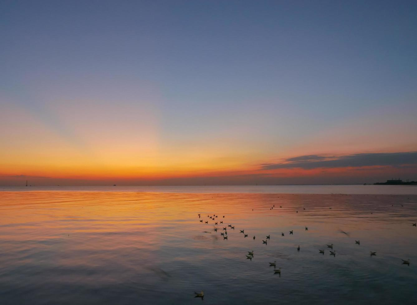Seagulls wading in ocean during sunset photo
