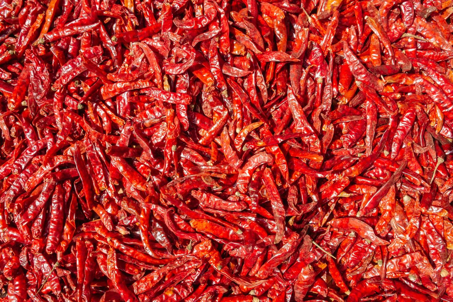 Dried red peppers photo