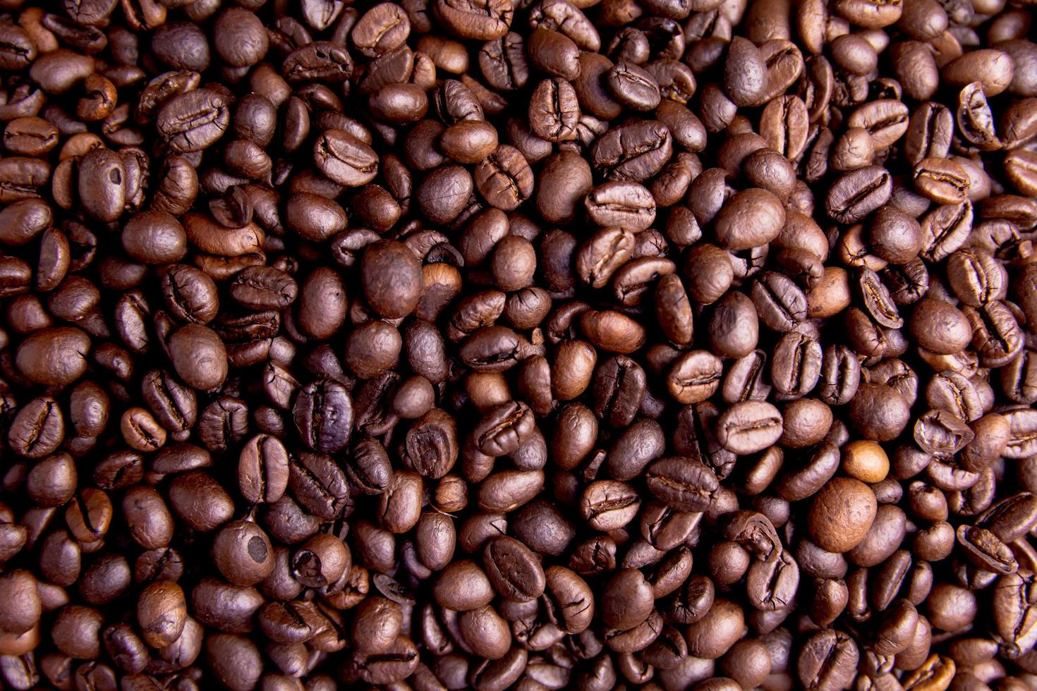 Close-up of coffee beans photo
