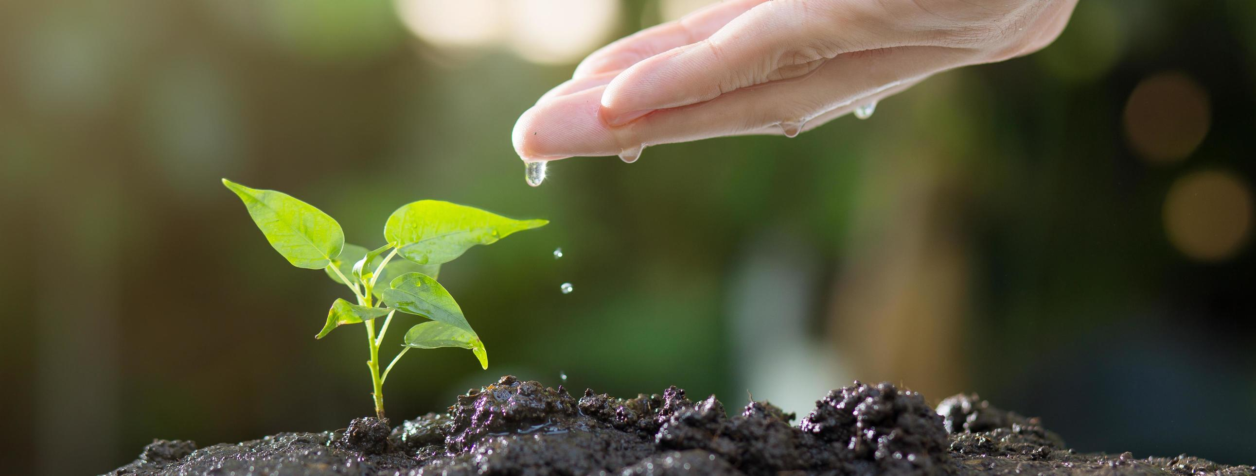 Close up of hands watering young tree on soil photo