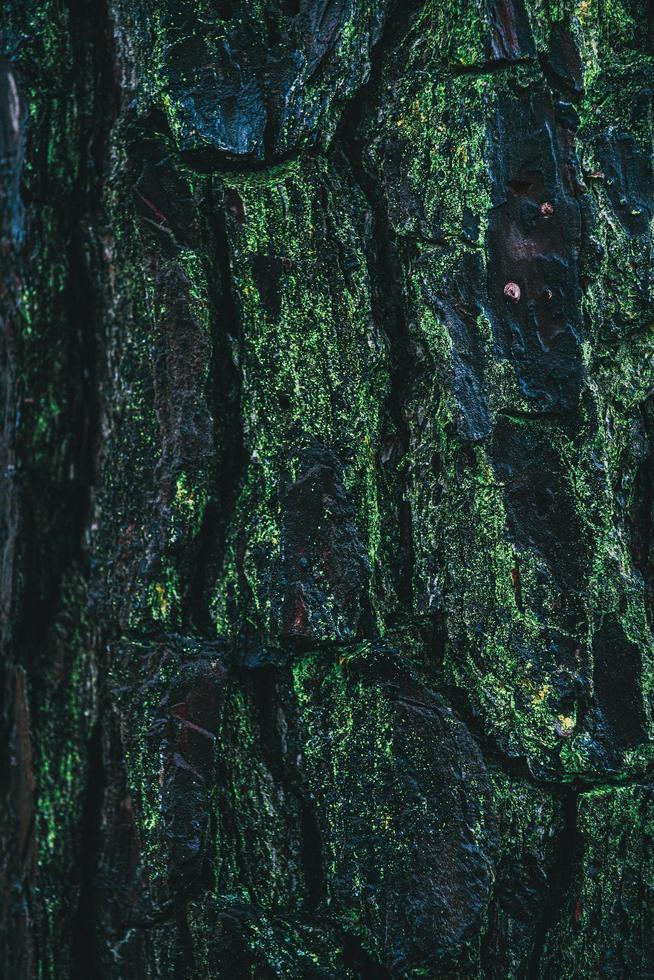 corteza de pino cubierto de musgo foto