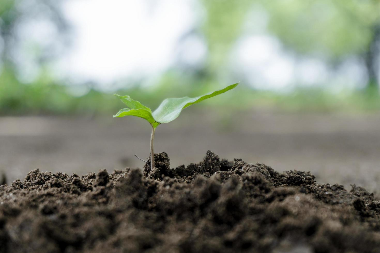 Plant sprouts from soil in garden photo