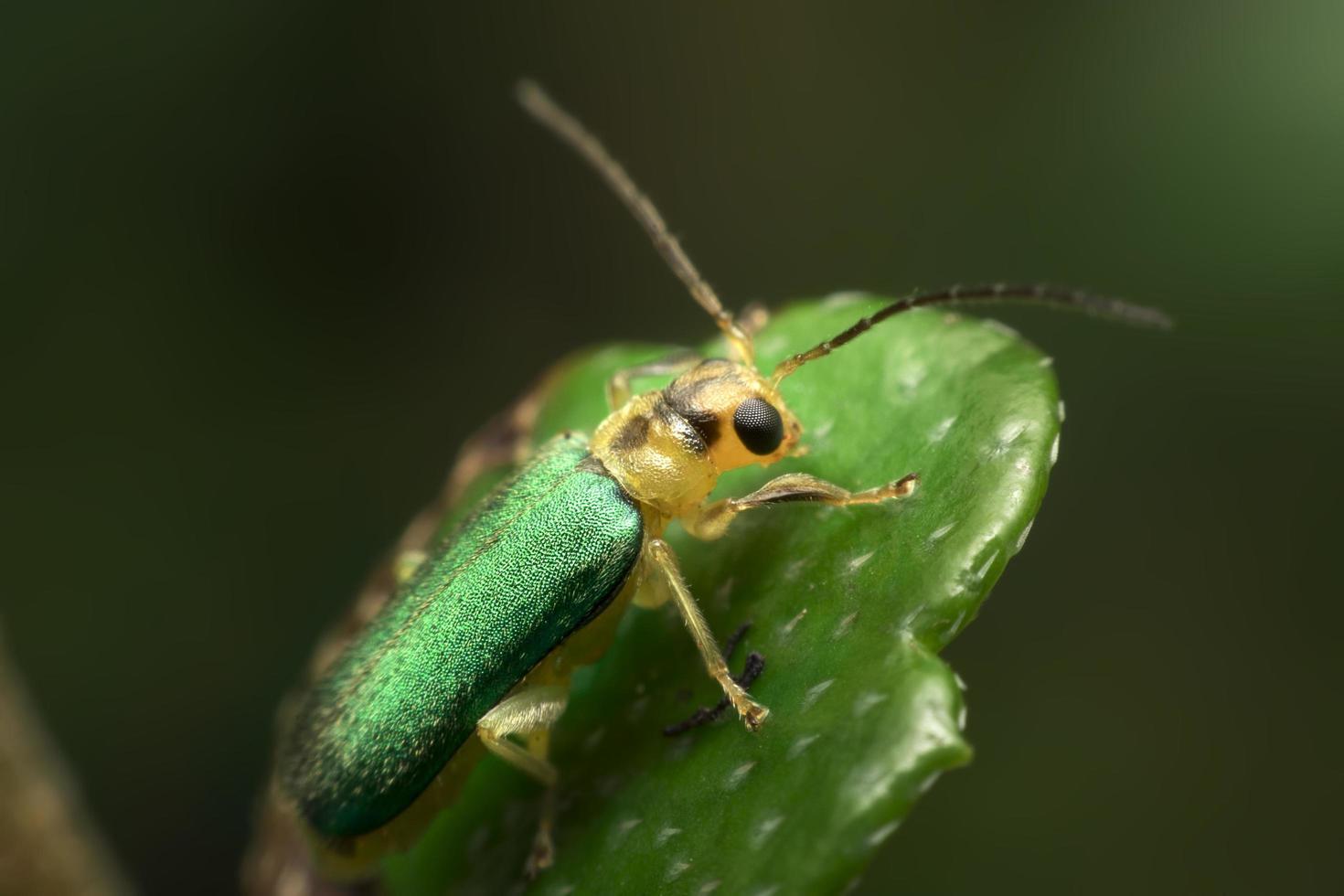 escarabajo verde sobre fondo de hoja verde foto
