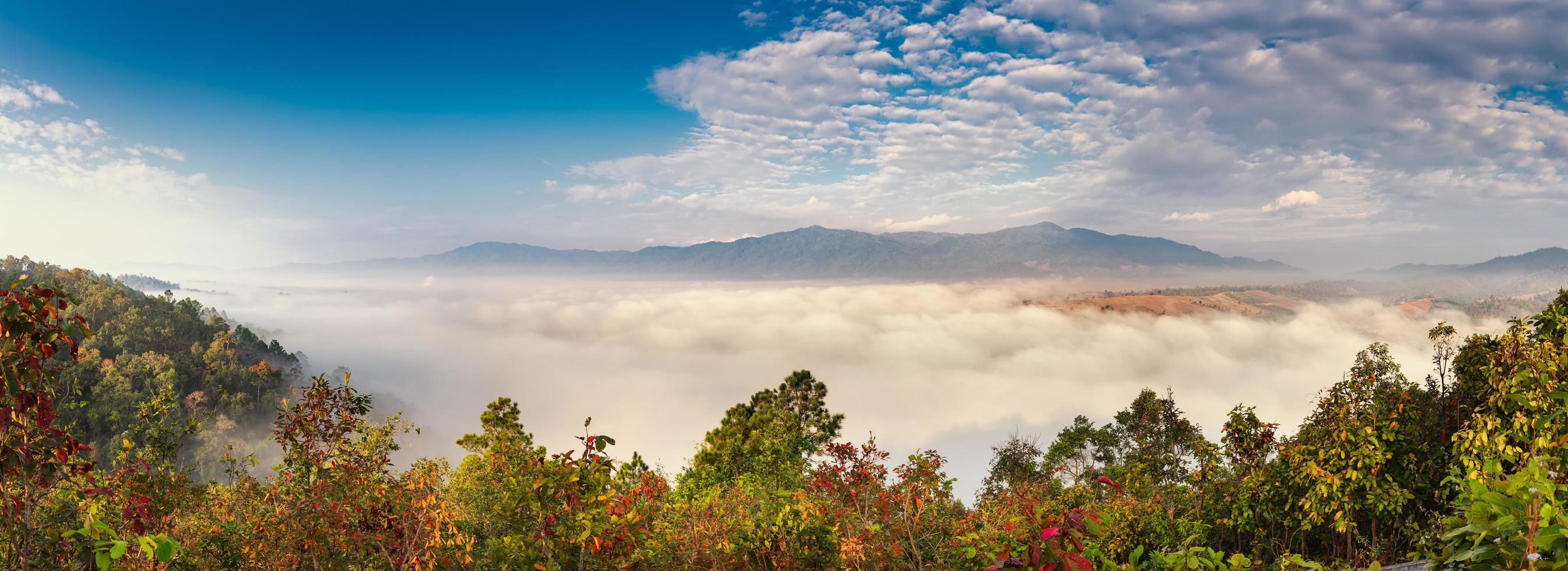 Forest with clouds and mountains photo