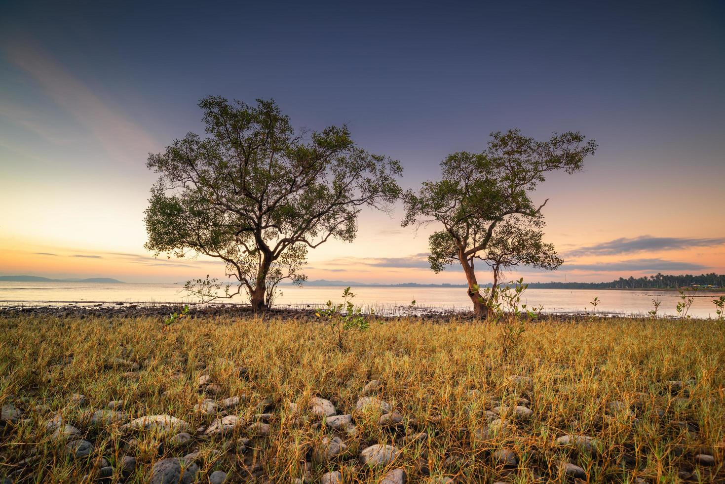 Trees by water at sunrise photo