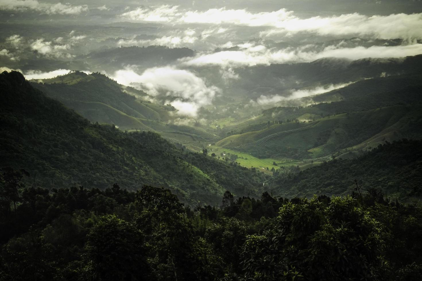 Green tropical rain forest and mountain range photo